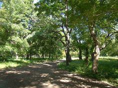 tree leaf shadow midday summer park - Google Search