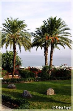 """""""Jesus returned to the Sea of Galilee and climbed a hill and sat down"""" (~ Matthew 15:29) 