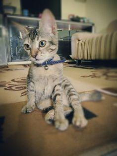 Baby Catty, going to 4 months