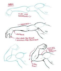 best drawing tips, disney drawings, drawing poses of techniques, great examples of drawing tutorial. Anatomy Sketches, Anatomy Drawing, Anatomy Art, Human Anatomy, How To Draw Anatomy, Arm Anatomy, Body Anatomy, Drawing Techniques, Drawing Tips