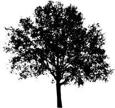 Silhouette vector clip art of vase tree top. Black and white image of a tree. Tree Silhouette, Silhouette Vector, Public Domain, Free Pictures, Free Images, Vase, Tree Tops, White Image, Tree Designs