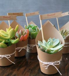 darling potted succulents