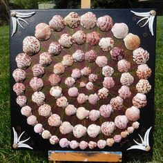 Seashell Swirl Beautiful Pink Scallop Seashells Sailor