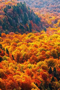 The autumn forests of Steneto reserve in Balkan Mountains ( photi by Evgeni Dinev)