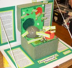 10 Awesome Ways to Make a Cell Model   Cell model, Plant cell ...