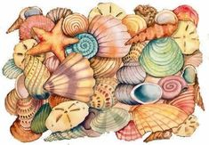 sea shell drawing | Real cool pictures of sea shells