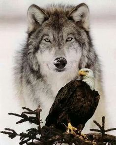 The Eagle & The Wolf.