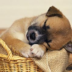 What a cutie! Cachorro (Dog)