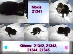 MOXIE - 21341 & KITTENS - 21342, 21343, 21344, 21345