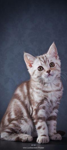 Beautiful Kittens, Cute Cats And Kittens, Kittens Cutest, Cat Wallpaper, Original Wallpaper, Raining Cats And Dogs, Pet Rabbit, Cat Art, Dog Cat