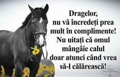 True Words, The Funny, Horses, Humor, Diy, Photos, Bricolage, Humour, Horse