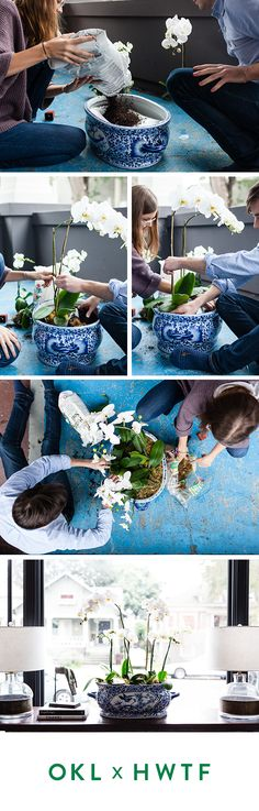 Try potting an orchid in a vintage chinoiserie vase! Orchid Care, Chinoiserie, Orchids, Lily, Orchid