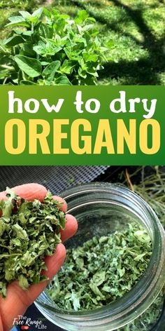 Do you have a garden full of oregano? Learn how to dry oregano so you can enjoy that great oregano taste in dishes and meals all year long! Oregano is a wonderful culinary and medicinal herb with a ton of uses, learn how to preserve it for all year use! Oregano Plant, How To Dry Oregano, How To Dry Basil, Herb Recipes, Canning Recipes, Oregano Recipes, Cooking Tips, Gardens, Gourmet