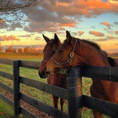 Kentucky is Horse Country U. See Churchill Downs racetrack, tour Kentucky horse farms, attend the Kentucky Derby, visit museums and a horse park. All The Pretty Horses, Beautiful Horses, Animals Beautiful, Cute Horses, Horse Love, Cavalo Wallpaper, Kentucky Tourism, Farm Animals, Cute Animals