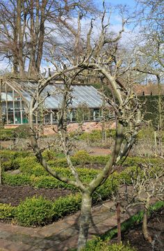 Globe-shaped fruit tree in the Old Rectory potager, Sudborough, designed by Rosemary Verey. Espalier Fruit Trees, Trees And Shrubs, Fruit Garden, Edible Garden, Potager Garden, Garden Landscaping, Vegetable Garden Design, Garden Structures, Dream Garden