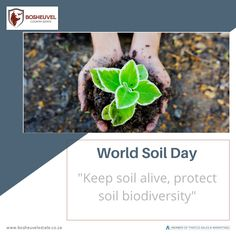 """Today is World Soil Day """"Keep soil alive, protect soil biodiversity"""" Plants nurture a whole world of creatures in the soil, that in return feed and protect the plants. This diverse community of living organisms keeps the soil healthy and fertile. This vast world constitutes soil biodiversity and determines the main biogeochemical processes that make life possible on Earth. This year, by addressing the increasing challenges of soil management, the Food and Agriculture Organization (FAO) campa"""