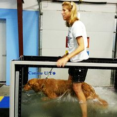 Today is #NationalWalkingDay! Try something different with your dog today - use our AquaPaws Underwater Treadmill System to walk or run!