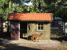 1. Robuuste houten stal met een hooiruif geschikt voor dieren als schapen geiten akpala en pony 10m2