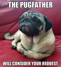 For all of you pug lovers! Happy Wednesday http://www.youmustlovedogsdating.com