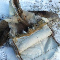 Inuit Parker