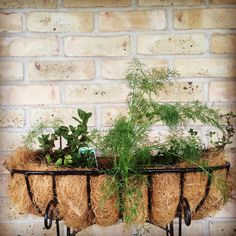 We are the tools you need to start your new herb garden. #cultured & #creative
