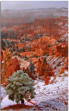 Red #land, charming #mountains and lonely #trees.