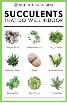 10 types of succulents that work well indoors - Haus und heim - Pflanzen
