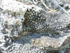 Esporas de antiguos corales.