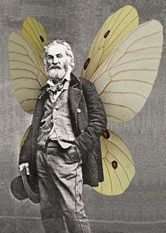 In Paths Untrodden: Walt Whitman's Calamus Poems and the Radical Faeries, curated by Joey Cain, SF Public Library's James C. Hormel Gay & Lesbian Center