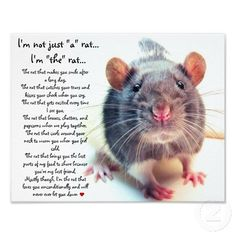 im_not_just_a_rat_poster-