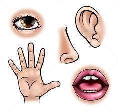 Five Senses stock vector. Illustration of design, hearing - 76233546 - Five Senses Clip Art Five Senses Preschool, My Five Senses, Senses Activities, Preschool Learning, Learning Activities, Preschool Activities, Preschool Body Theme, Body Parts Preschool, Body Parts For Kids