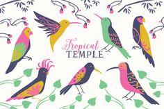 Tropical Birds Clip Art Set by RhianAwni #designtool #illustration #clipart