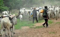 Court Gives Herdsman 2 Years Sentence For Grazing On Farmland.    A Chief Magistrate Court sitting in Ado-Ekiti has sentenced a herdsman Ali Haruna to two years imprisonment for grazing his cows in a farmland in Ado-Ekiti.  The Magistrate Idowu Ayenimo in his judgement said the accused was arraigned in his court on Jan 22 2016 on a two-count charge of willful and unlawful damage of farm crops at Ago Aduloju in Ado-Ekiti.  The 18-year-old Mr. Haruna was confirmed by the four prosecuting…
