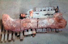 Foto mostra fêmur de dinossauro herbívoro encontrado na Argentina (Foto: Museo Egidio Feruglio/TELAM/AFP)