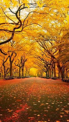 Yellow Tree Canopy, Orange Lemon ‿⭐️⁀Couture Central Park, New York City Beautiful World, Beautiful Places, Beautiful Pictures, Beautiful Live, Ville New York, Fall Pictures, Autumn Photos, Stunning View, Mellow Yellow