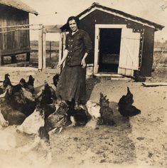 Vintage photograph. Date unknown. A farmyard with a large flock of chickens.