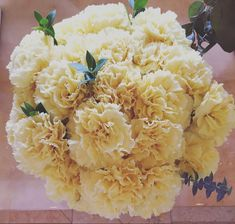 Yellow Carnations, Mini Carnations, White Carnation, Peach Flowers, Cream Flowers, Colorful Flowers, White Flowers, Wholesale Florist, Flowers For Sale