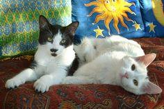 Wenn die Katze eine Vollmeise hat: Katzen sind schlau und dickköpfig. Aber einen Nachteil haben alle intelligenten Tiere: Sie können Neurosen entwickeln. Bei den Samtpfoten kann das extrem nervtötend sein.