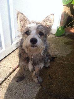 #Founddog  #HornLake #MS Sweet dog Tulane JACKIE HUGHES FIVEASH TUNICA HUMANESOCIETY https://m.facebook.com/story.php?story_fbid=691689080912903&id=381799331901881