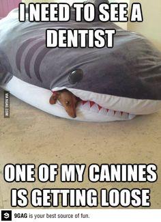 I need a dentist!