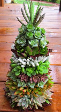 Christmas tree with succulents
