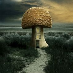 Mushroom house - want one for the end of the garden.