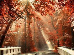 fall.....  Do you need more time to enjoy life and don`t worry about the money? http://www.flppro.com