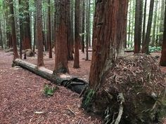 """19 träd som inte har för intention att """"bli besegrade"""""""
