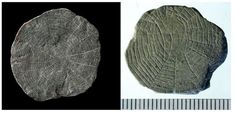 """#PlanetToday #News: #Archaeologists have found, on the #Danish island of #Bornholm in the #Baltic_Sea, the mysterious """"#cobweb_stones"""" dating from the stone age, which may have been used in religious ceremonies."""