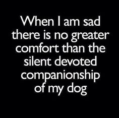 When I am sad thre is no greater comfort than the silent devoted companionship of my dog  -photo credit to the owner #dogs #cats