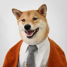 Conoce a Bodhi, El Perro Más A La Moda Del Mundo. ¡Que Estilo!