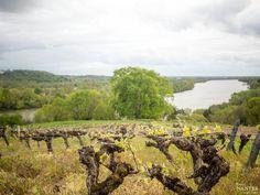 Domaine viticole des Génaudières - pays d'Ancenis - loire Atlantique Le Mans, Saumur, Boutique Deco, Laval, Blog, Nantes, Atlantic Ocean, Vineyard, Pays De La Loire