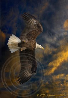 Vertical Flying Eagle Style
