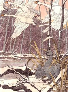 Tomislav Tomić's timeless illustration of 'The Ugly Duckling'. Taken from The Orange Fairy Book published by The Folio Society. Children's Book Illustration, Watercolor Illustration, Book Illustrations, Ugly Duckling, Fairytale Art, Faeries, Book Art, Fairy Tales, Drawings